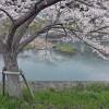 4月15日 三田市 藍本 武庫川沿いを自転車で走ってみた。
