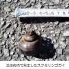 7月8日、市内の圃場でジャンボタニシの発生が確認されています。