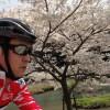 2014年4月8日 武庫川堤防を三輪から広野へ 自転車で走る。