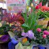 寄せかご お花を長く楽しみたい! お花を来年も咲かせたい! そんな方にぴったりなのが寄せかごです。ポッドのまま入っているので自由に動かすこともできます。 イオン三田WT 2番街 グリーンスタイル